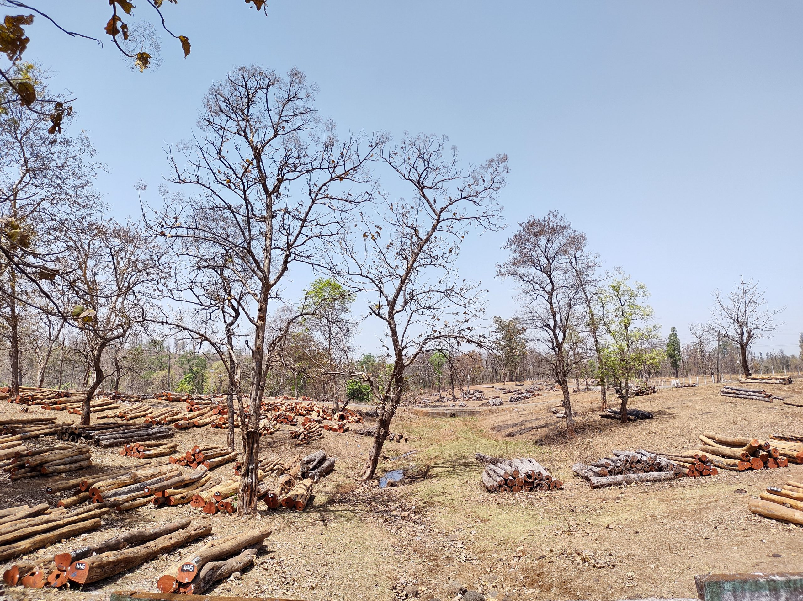 Photo 2_ A timber yard on the outskirts of Ahwa, Dang