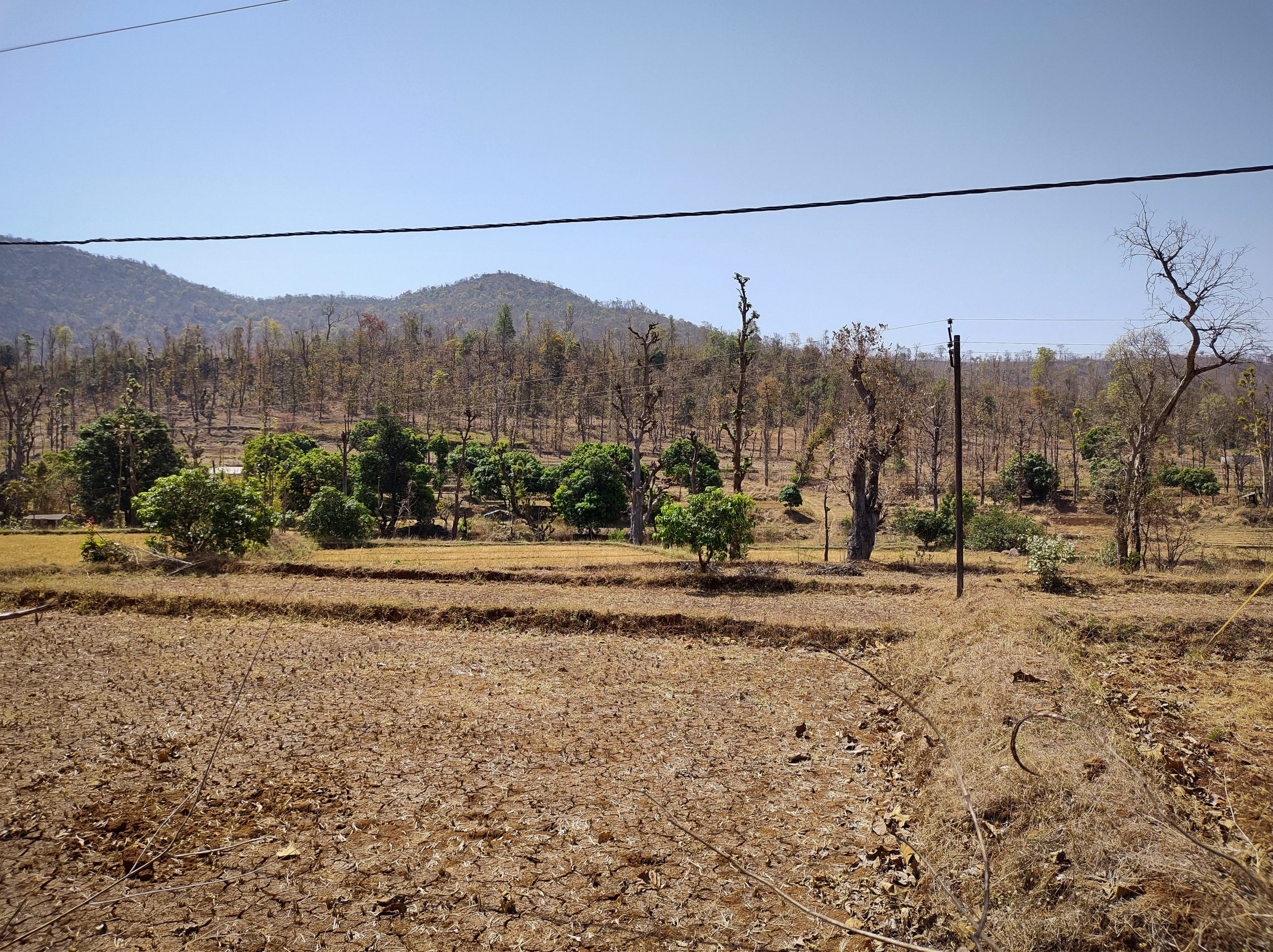 Photo 3_ A Dangi Landscape, where private lands also have commercial and fruit trees which brings in additional revenue.
